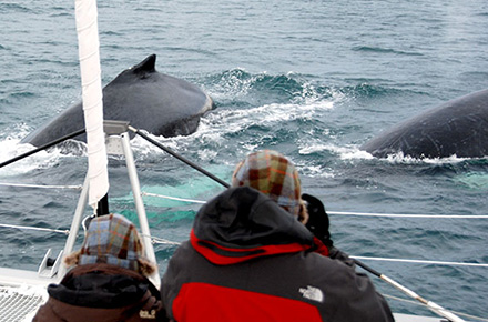 WHALE WATCH (BY BOAT)