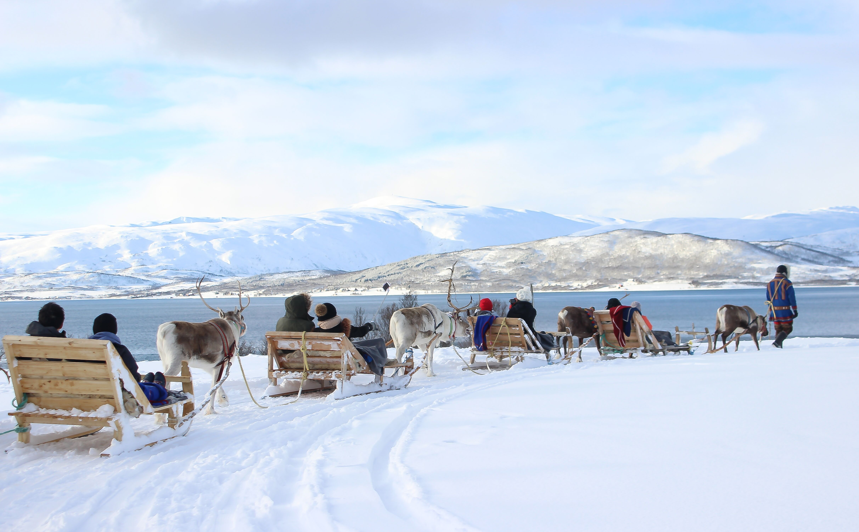 Experimente a Cultura Sami e as suas renas (viagem de treno e alimentação)